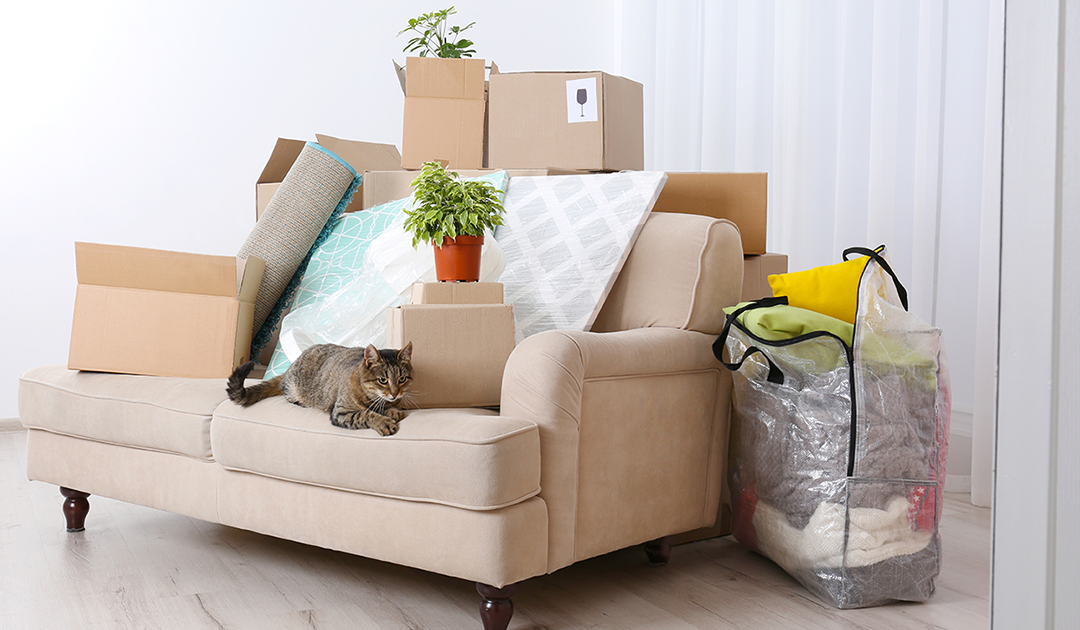 What to Do When You're Moving With Pets